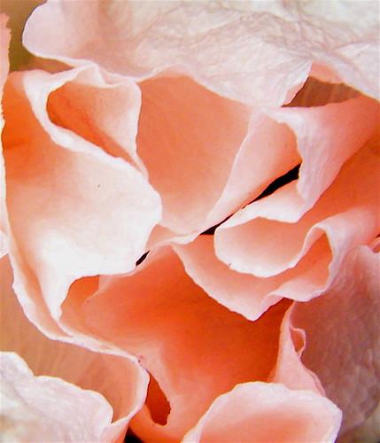 Pink Poppy 2