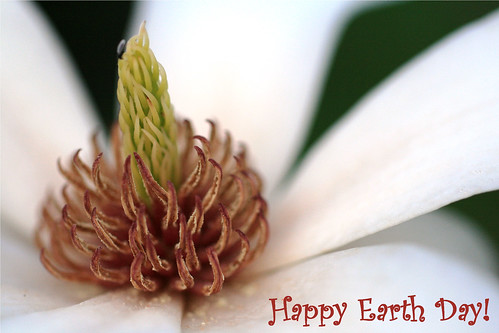 Magnolia to Celebrate