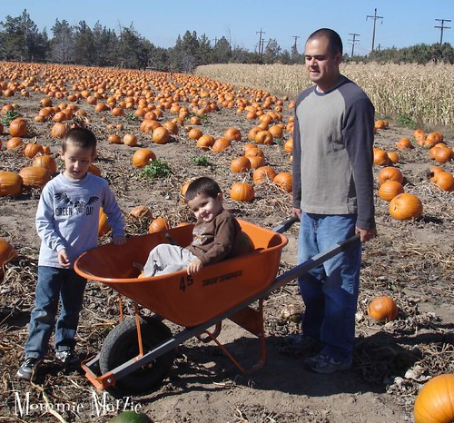 pumpkin patch 6