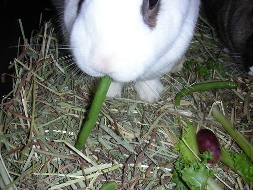 Noshing on green beans