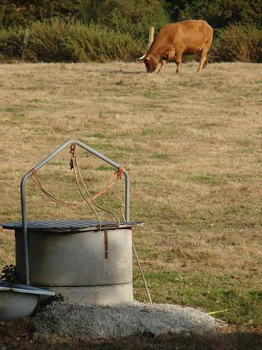 El pozo y la vaca