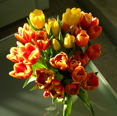 A vase of tulips by sfPhotocraft