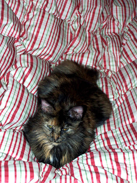 Kiddle on Bedspread