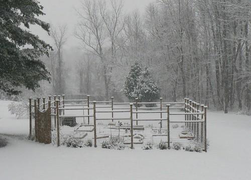 garden in snow.JPG