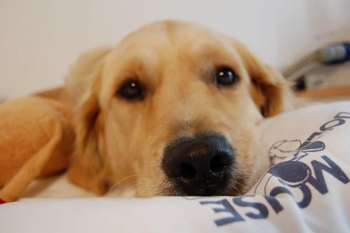 Pillowthief