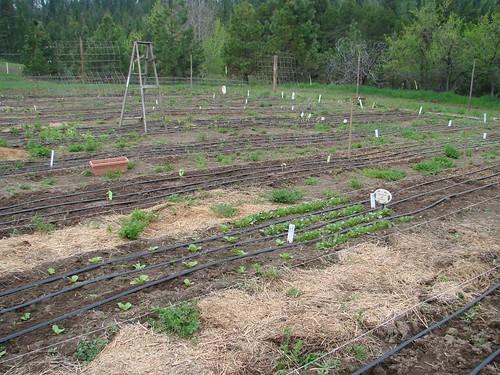 GardenIrrigation