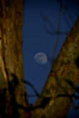 Delta Moon Rising