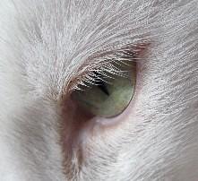 Teddy_Eye_Lashes_20071025_01x