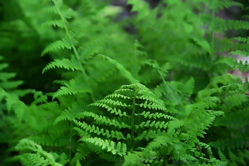 Soft Fern Green