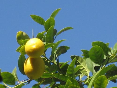 lemon yellow