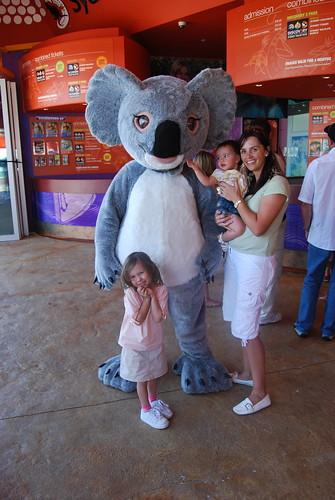 Koalas were bigger than we thought.