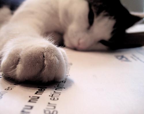 letra de gato