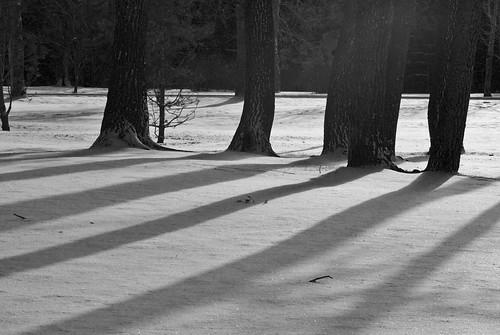 Treeshadows2