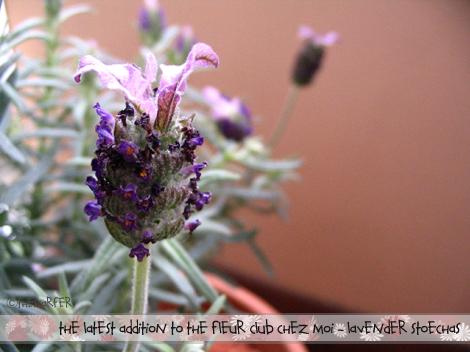 Fragrant lavender...