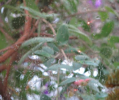 Rainy January