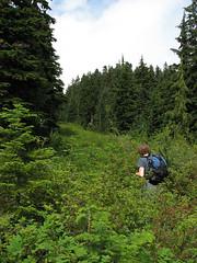 Hollyburn peak, 26 Aug 2007