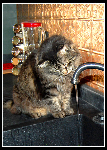 Checkin' out the sink.