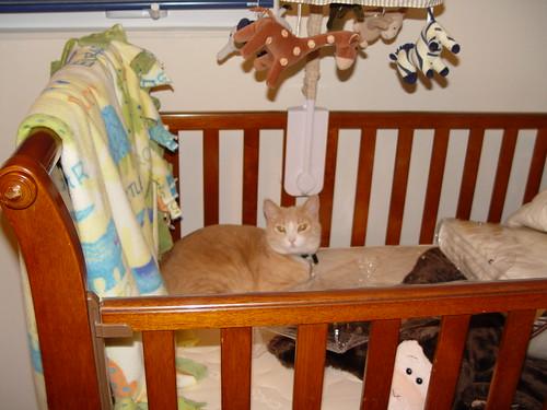 Nutmeg in crib.
