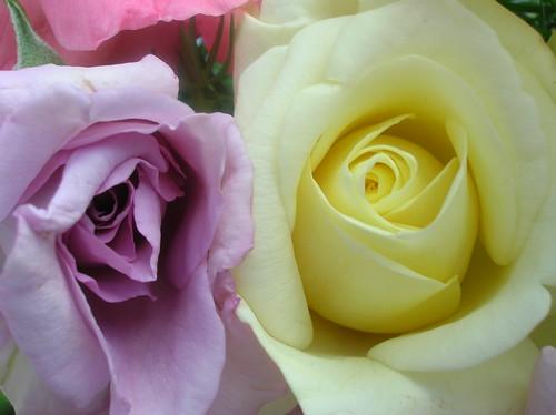 Rosas caseras 2
