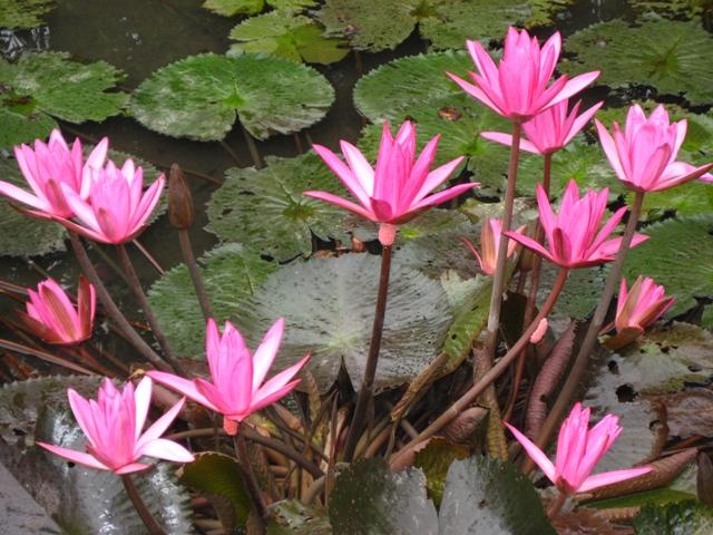 A Touch Of Beauty   ilocano: liday ken ragsak