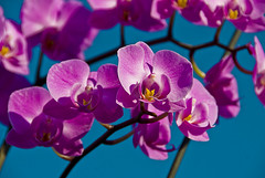 Orchid, close & personal