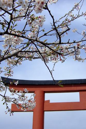 Sakura and tori