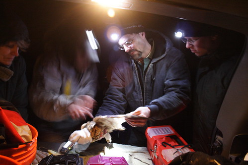 Chuck Rosenburg and his team check feathers to determine the age of the bird...
