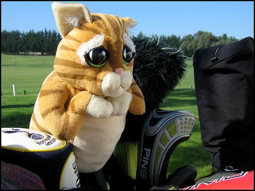 Golfi cat