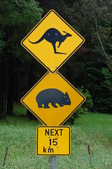 Kanga and Koala Crossing