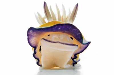 2499631264 6fa0ced403 o Criaturas inacreditáveis do fundo do mar