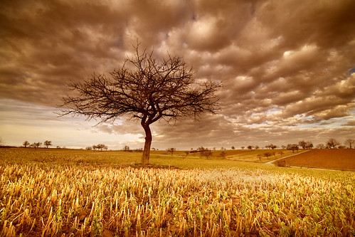 The Golden Landscape