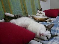 One cat071028