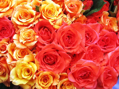 Send you some Roses