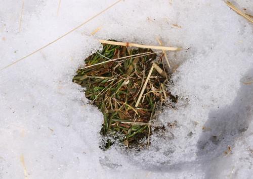 Green grass!