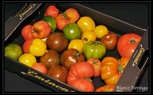 Inca Tomatoes freshly delivered