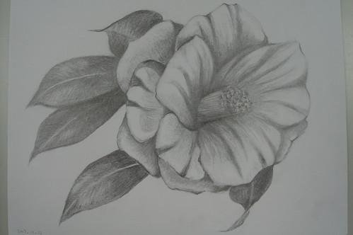 惠珠_茱槿花