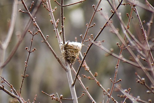Frost Covered Bird Nest