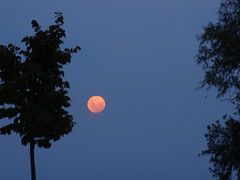 Luna al anochecer