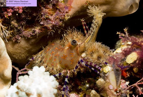 Selayar - South Sulawesi's underwater haven (6/6)
