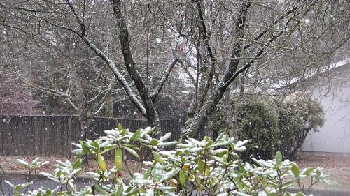 SNOW! on Dec. 1st