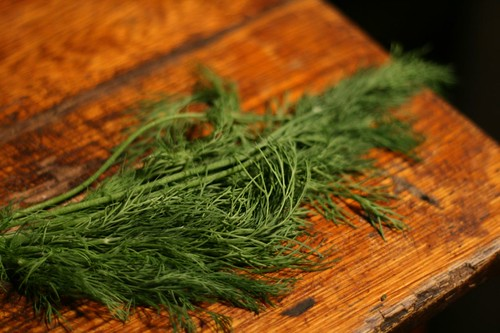 Whispy fresh dill from the farm