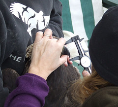 measuring the beak