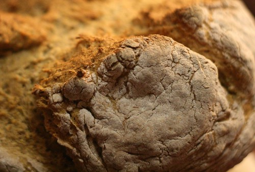 Up close and personal with Sage Soda Bread