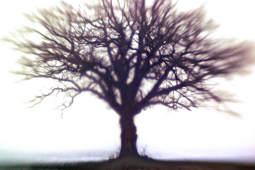 The Tree Abstract 9