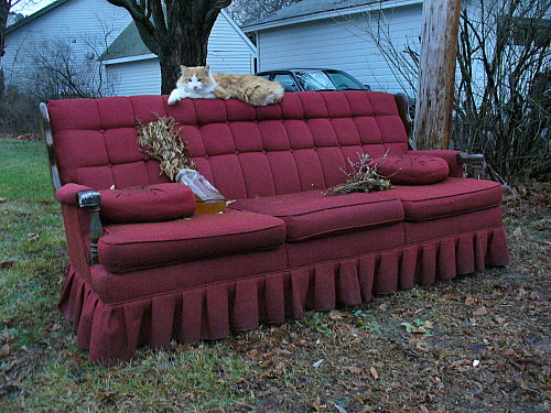Feral sofa with cat