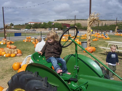 pumpkin patch 010