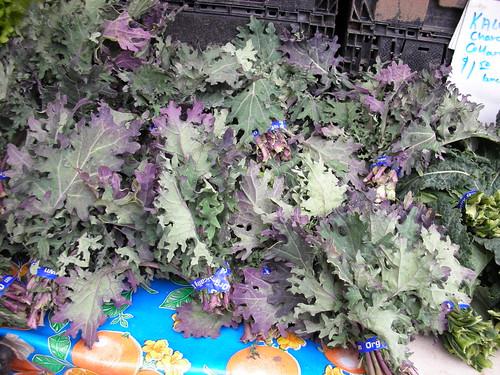 Oak leaf kale
