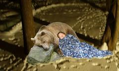 Hibernating bear and human
