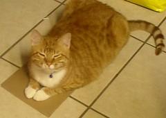 Ethan on Cardboard
