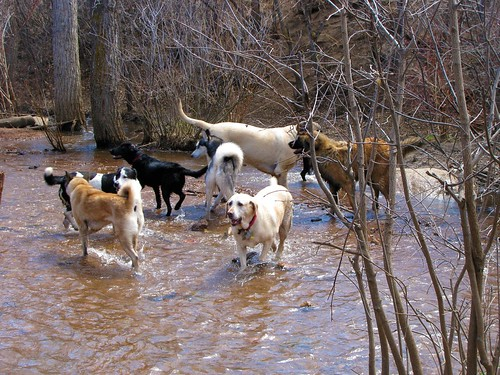 Stream full of dogs